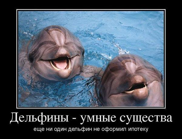 Delfiny - istoty rozumne. Jeszcze żaden delfin nie wziął kredytu hipotecznego