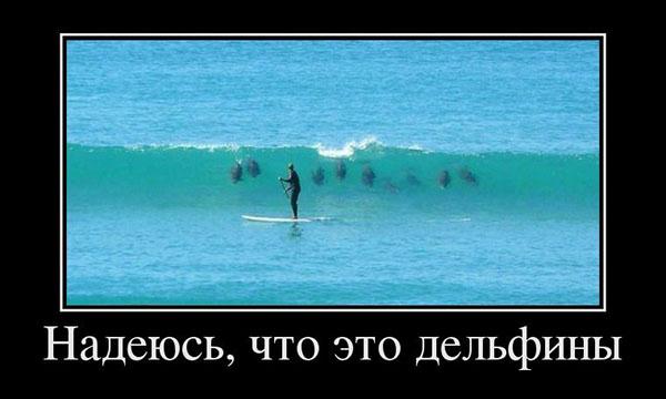 Mam nadzieję, że to delfiny