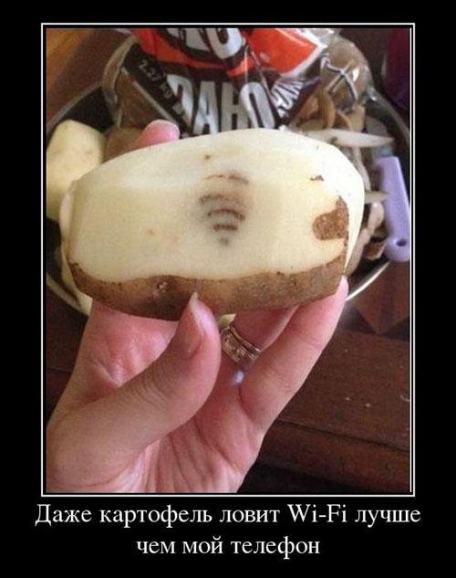 Nawet kartofel łapie wifi lepiej niż mój telefon